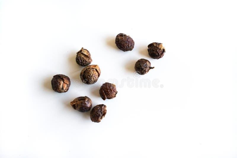 Washnut, soapnut van een washnutboom stock fotografie