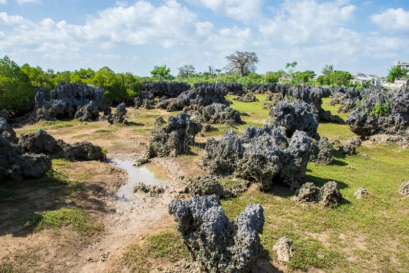 Wasini ö i Kenya arkivfoton