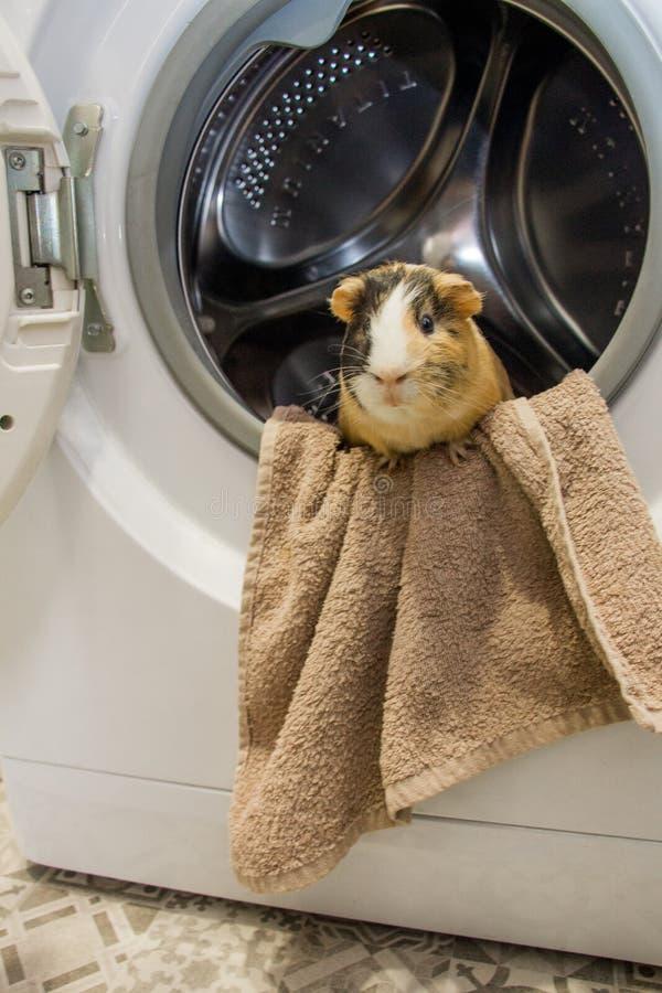 718 Grappige Wasmachine Foto S Gratis En Royaltyvrije Stockfoto S Uit Dreamstime