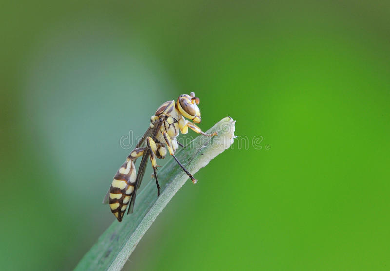 Download Wasp Royalty Free Stock Photos - Image: 26714328