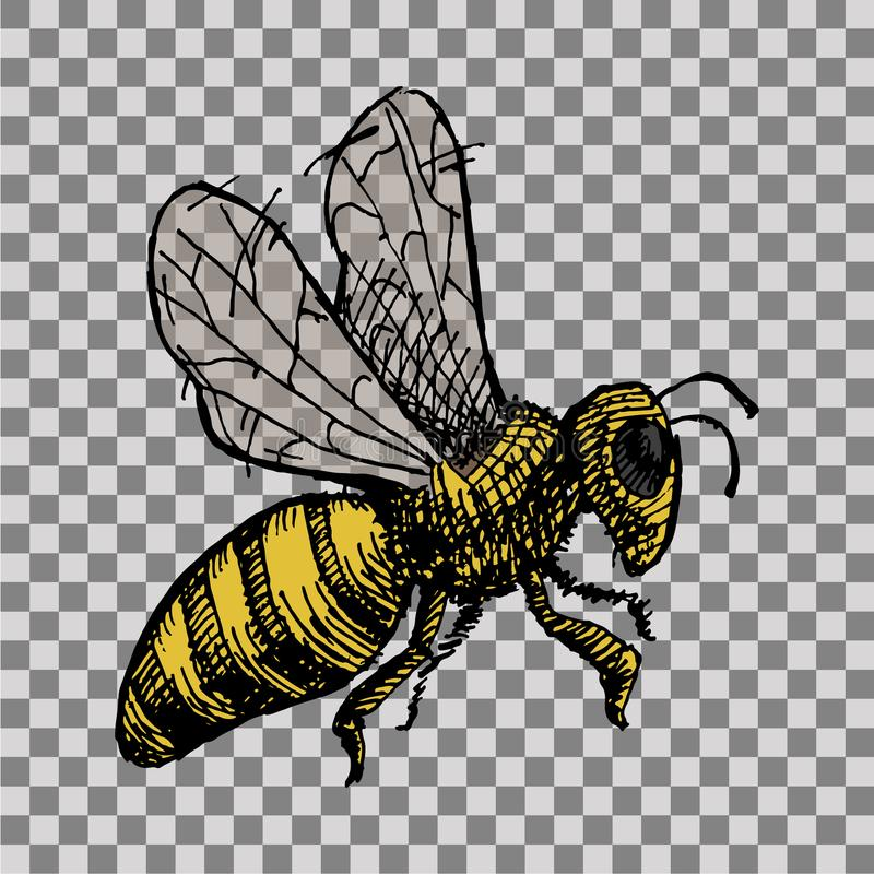 Download Hand Drawn Wasp Stock Illustration Of Isolated