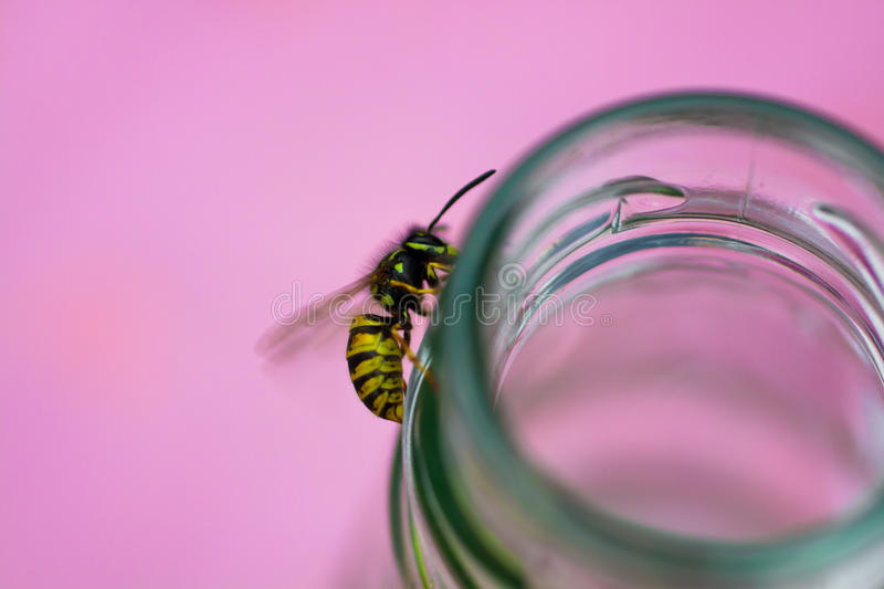 Wasp on a bottle royalty free stock photo