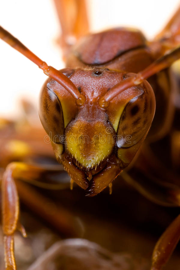 Wasp close. Portrait in vertical format royalty free stock photo