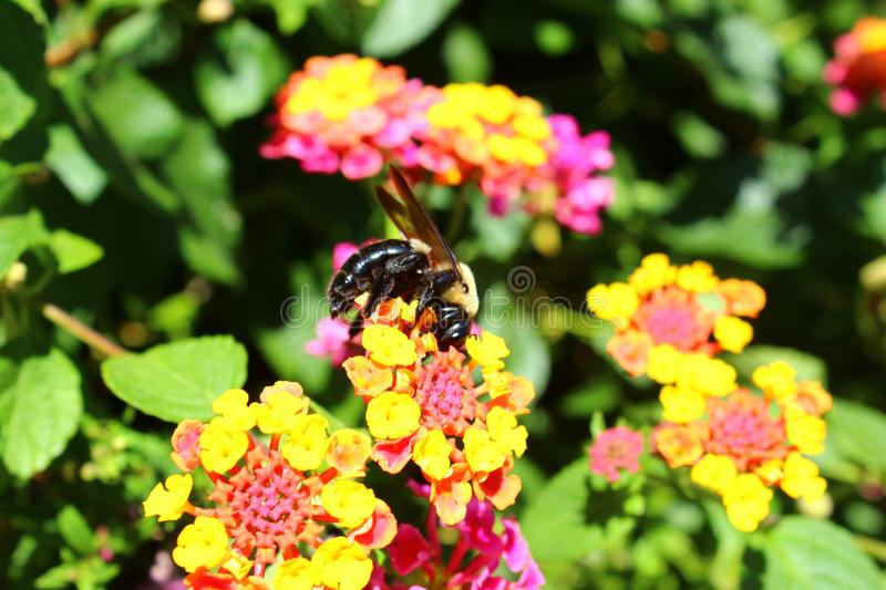 Wasp on a flower. Closeup of a wasp on a flower stock images