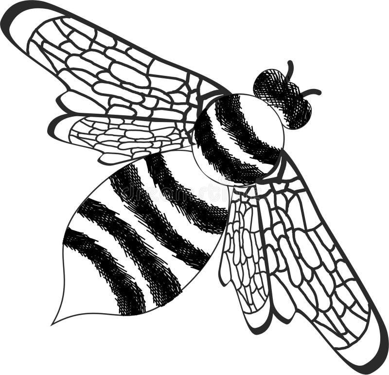 Wasp royalty free stock image