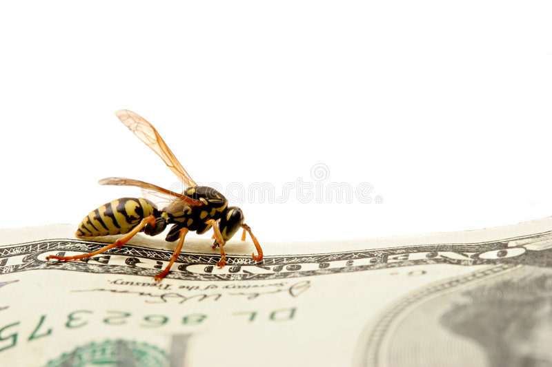 Download Wasp On Hundred Dollar Bill Royalty Free Stock Photography - Image: 314977