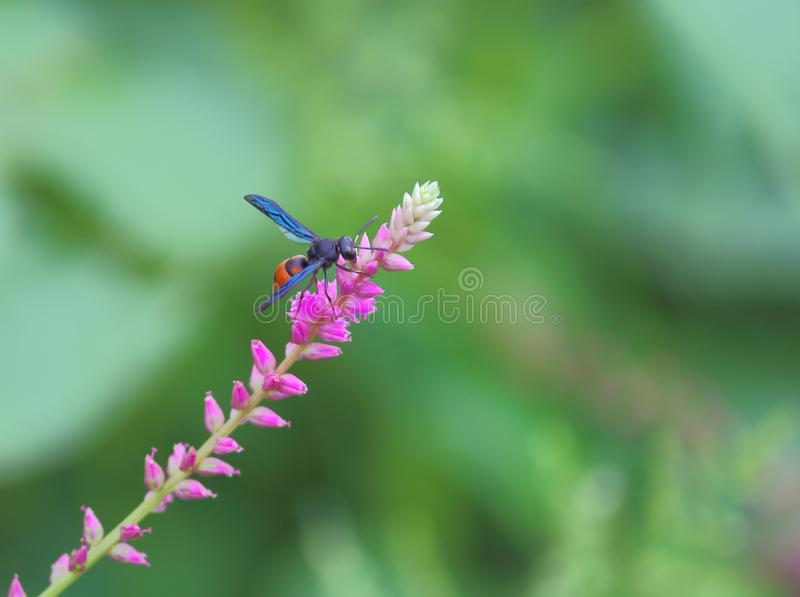 Wasp insect on flower stock photo