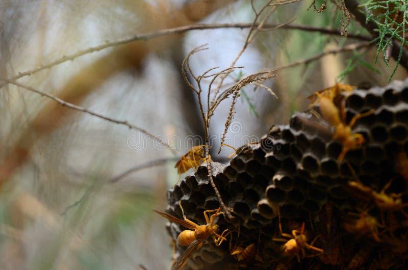 Wasp lek i solljus arkivbild