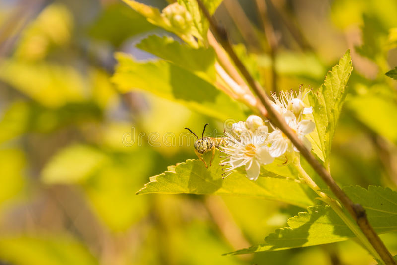 Download Wasp Looking Over The Top Of Leaf Stock Image - Image of wasp, animals: 80174941
