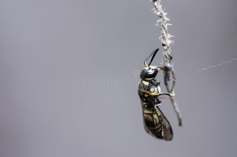 Download Wasp in the nature stock photo. Image of summer, wasp - 34978644