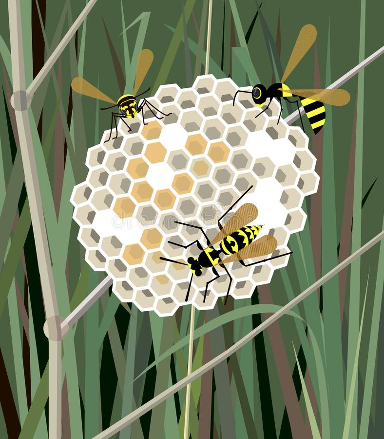 Wasp nest in the grass. Wasps fill honeycombs with honey on a background of grass royalty free illustration