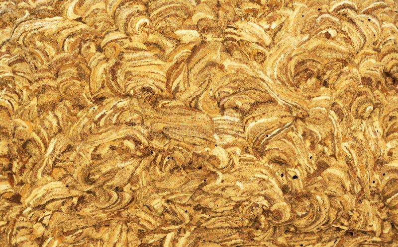 Wasp nest stock image