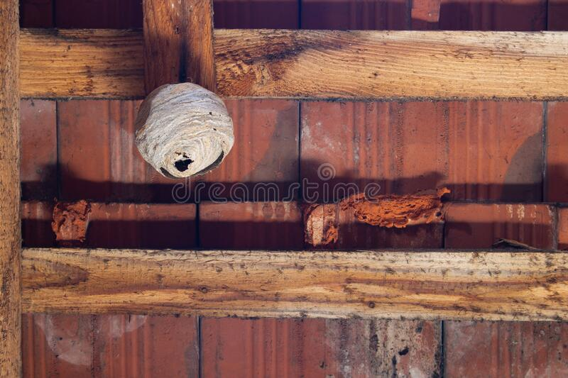 Wasp Nest On A Wooden Beam In The Attic Stock Photo ...