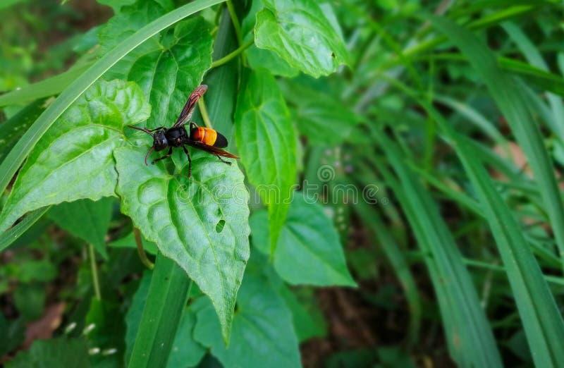 Wasp på det gröna bladet royaltyfri fotografi