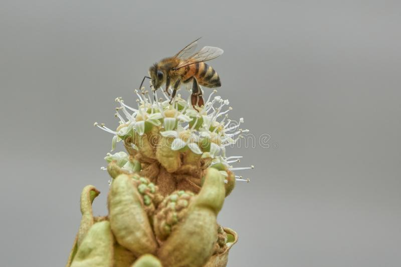 Wasp potter on plant. Wasp potter flying on plant stock photos