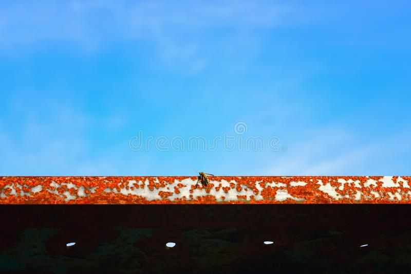 Wasp Sits On A Rusty Metal Texture Against The Sky stock photo