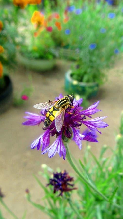 Wasp som sitter på en blomma fotografering för bildbyråer