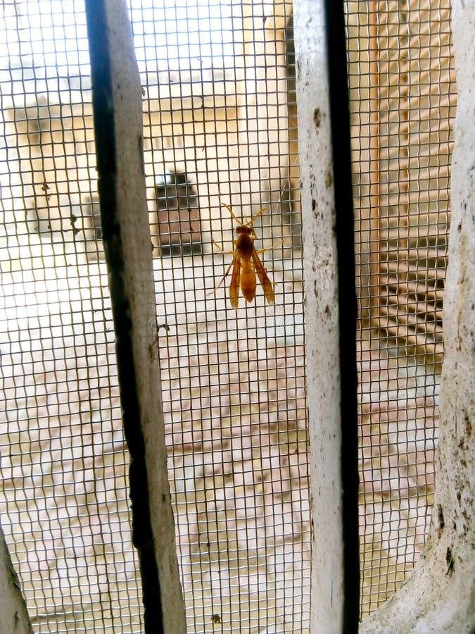 Wasp som sitter på ett galler royaltyfri fotografi