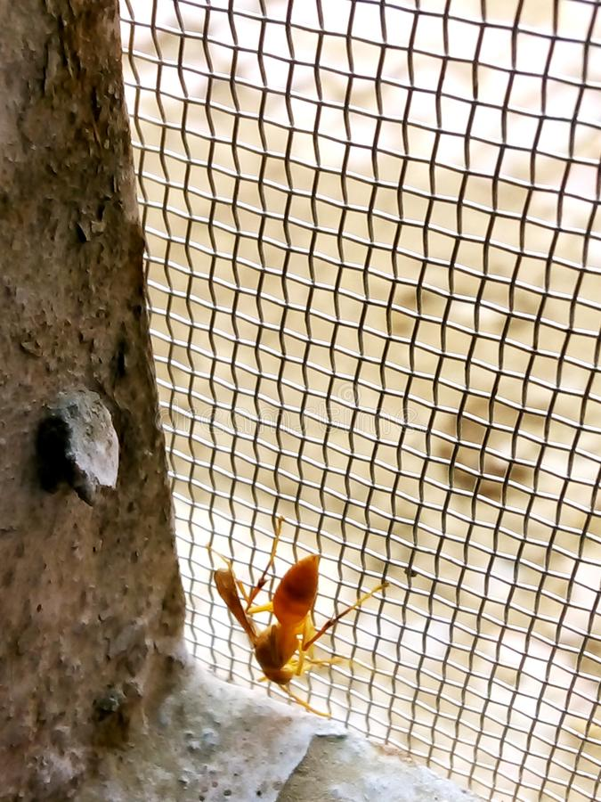 Wasp som sitter på ett galler royaltyfria bilder