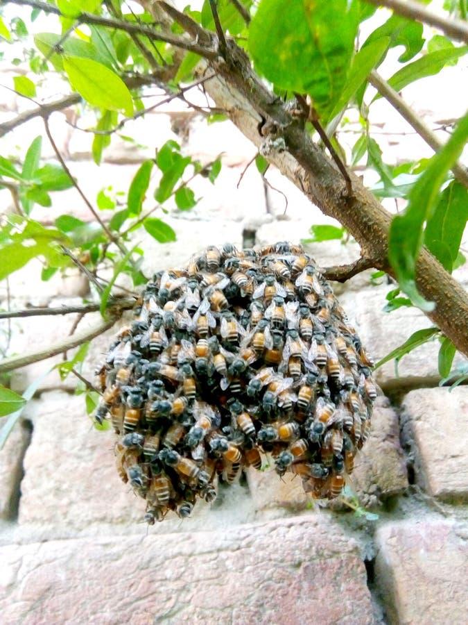 Wasp som sitter på ett galler arkivfoton