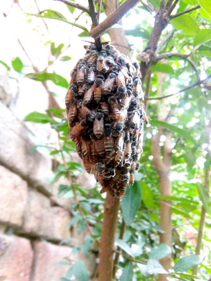 Wasp som sitter på ett galler arkivfoto