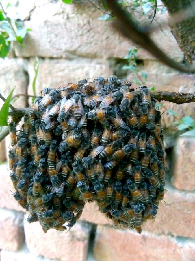 Wasp som sitter på ett galler royaltyfria foton
