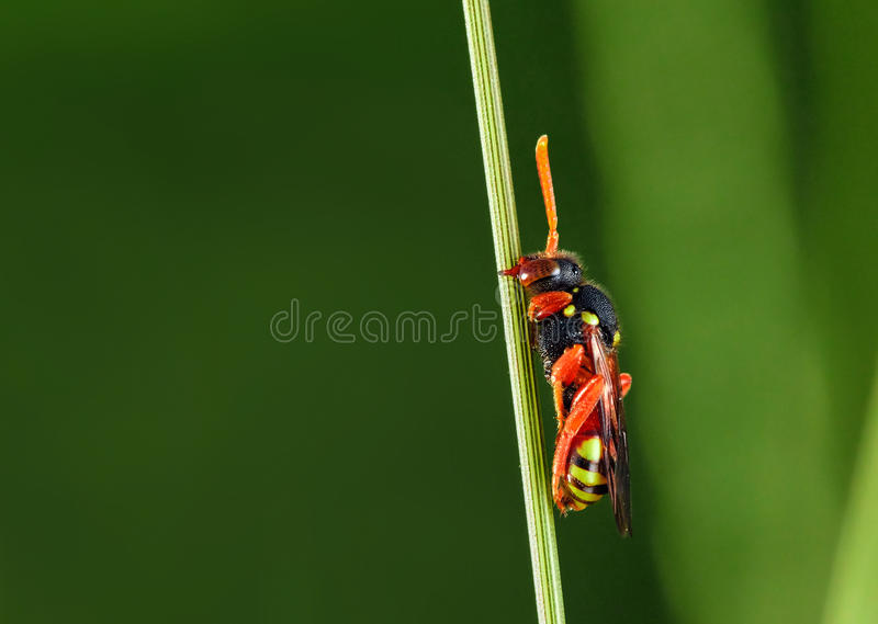 Wasp on the stem. macro photography. Insect stock images