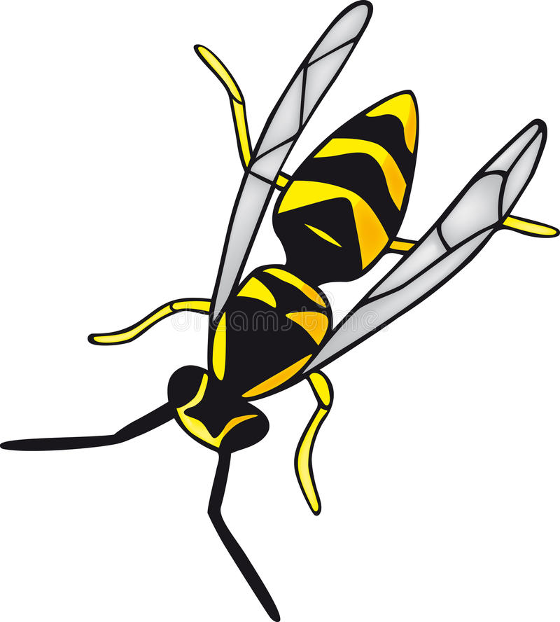Wasps. Illustration black and yellow wasp stock illustration