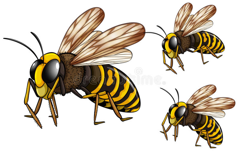 Wasps. Illustration of three wasps flying vector illustration
