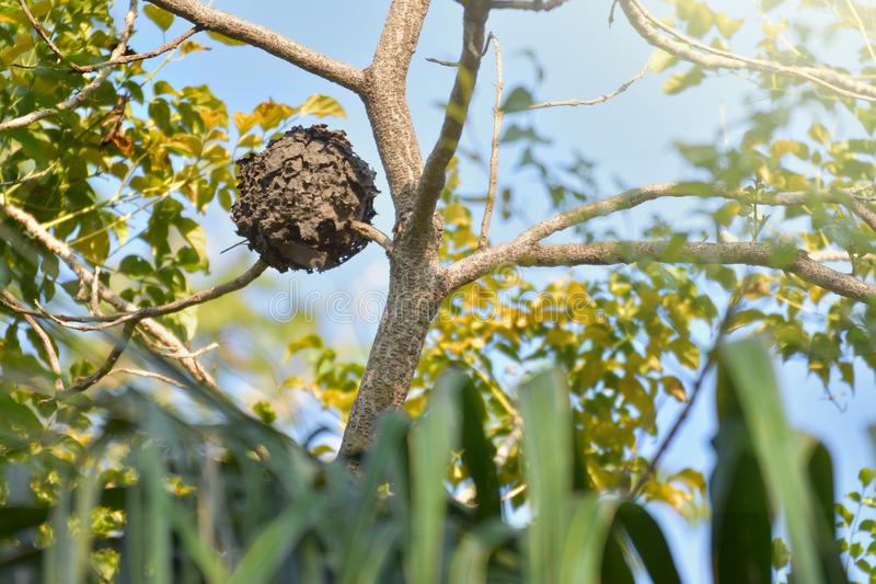 Wasps nest royalty free stock photography