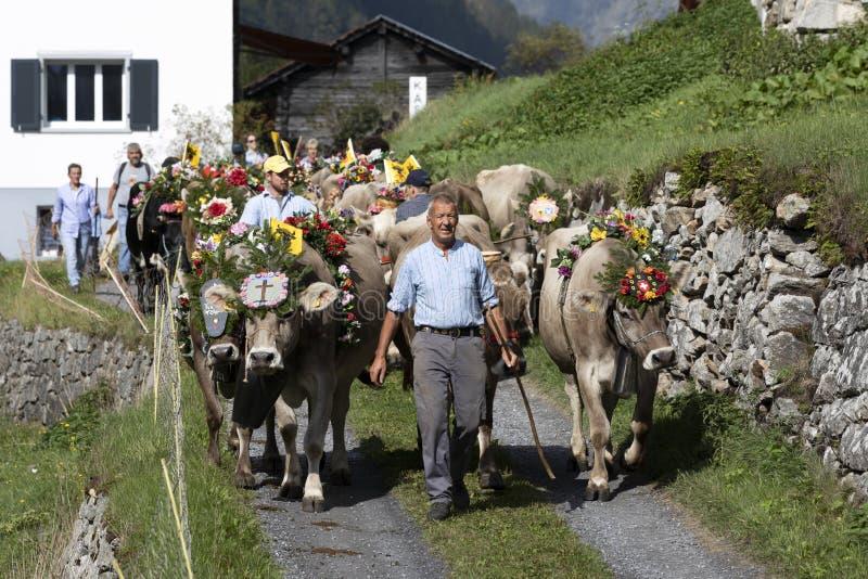 Wassen, Suíça, o 15 de setembro de 2018: Ceremonial que conduz para baixo do gado foto de stock royalty free
