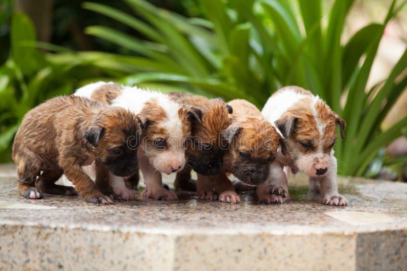Download Wassende vijf puppyhond stock foto. Afbeelding bestaande uit bruin - 39110684