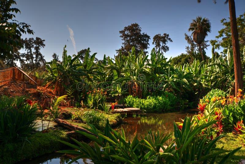 Wasser-Eigenschaft und Anlagen und Bäume im Park in Chimbote, Peru lizenzfreies stockfoto