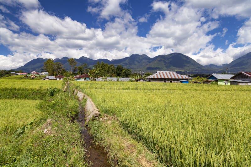Wasser für Reis-Felder lizenzfreie stockfotos