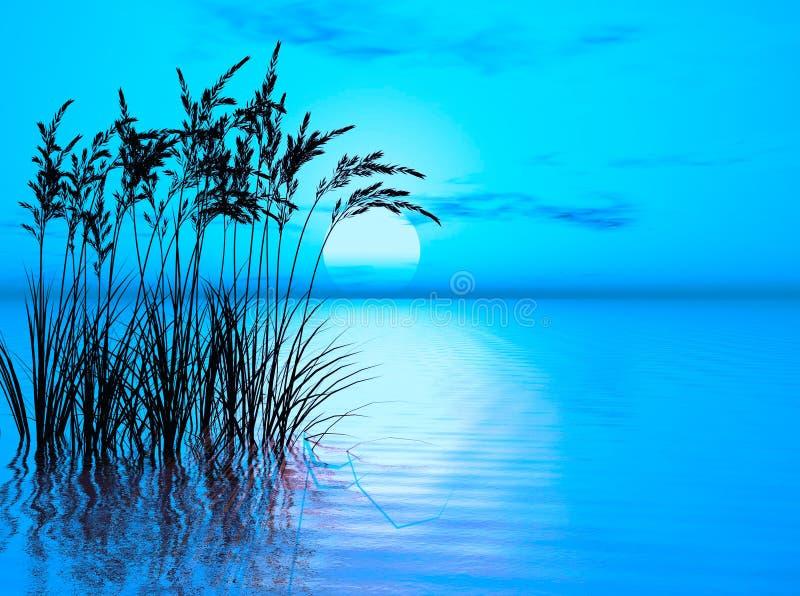 Wasser-Gras vektor abbildung