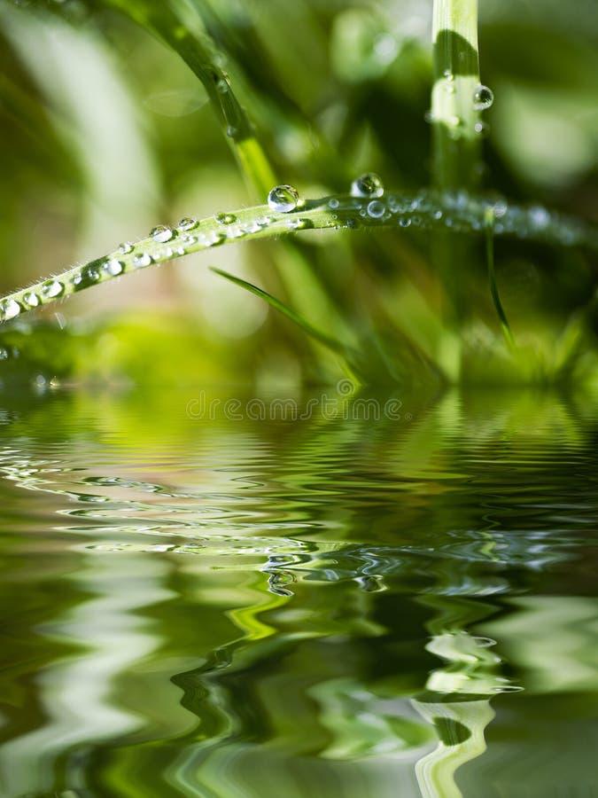 Wasser-Korne auf Blatt des Grases stockfotografie