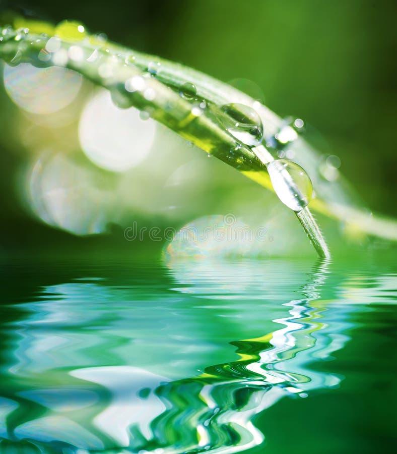Wasser-Korne auf Blatt des Grases lizenzfreie stockfotos