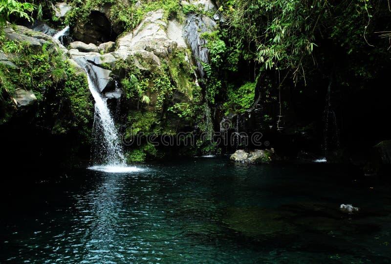Wasser-Pool frisch von der der Natur schönen Aussicht so stockbild