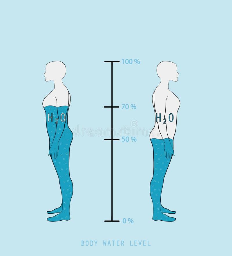 Wasser-Prozentsatzniveau des Frauenschattenbildes infographic darstellendes in der Vektorillustration des menschlichen Körpers stock abbildung