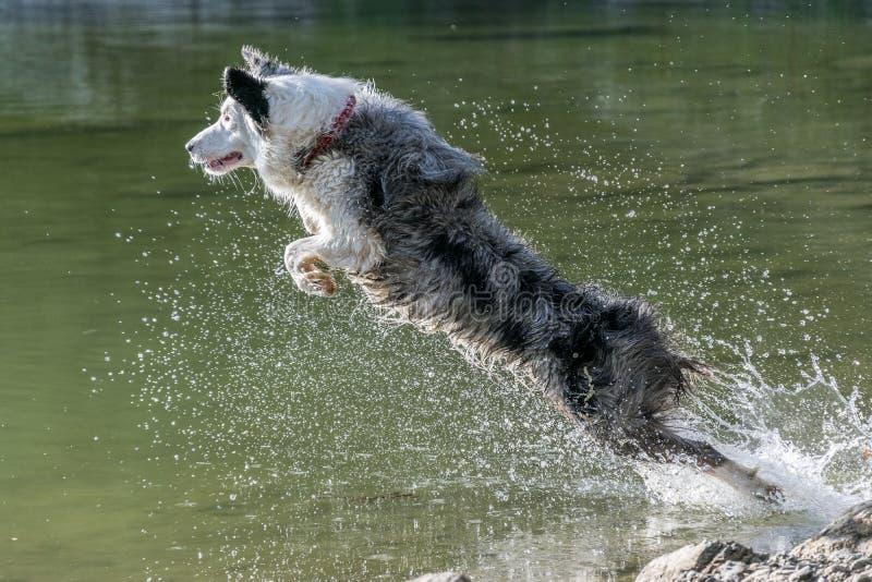 Wasser-Schäfer stockfoto