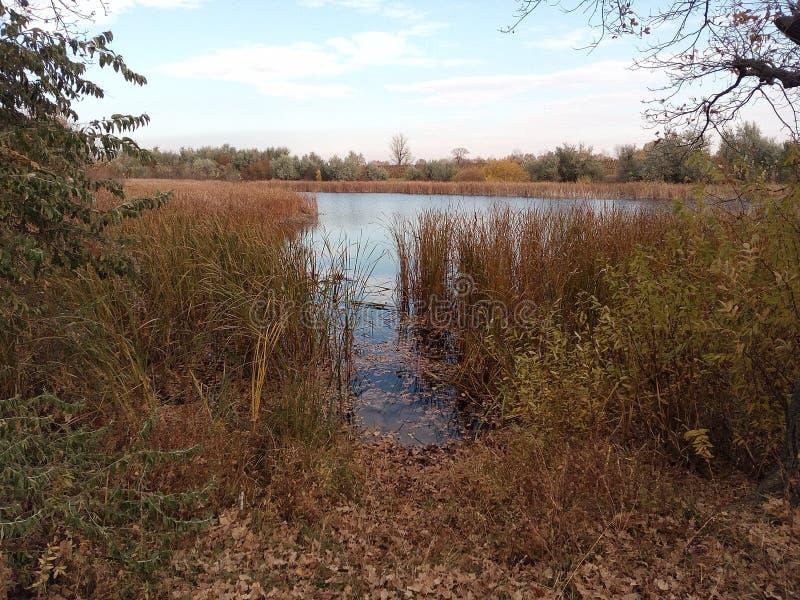Wasser, See, Schilf, Herbst, Gelb, Morgen, Fischen, Laub, Hintergrund, Rest, Betrachtung lizenzfreies stockbild