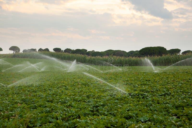 Wasser-Sprenger stockfotos
