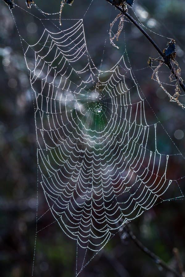Wasser-Tröpfchen auf einem Spinnen-Netz lizenzfreie stockbilder