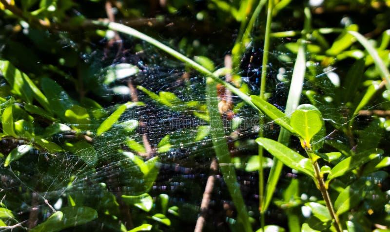 Wasser-Tröpfchen auf Spinnen-Netz slowakei stockbilder