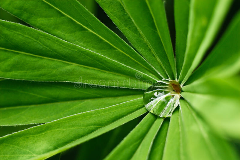 Wasser-Tropfen auf Grünpflanze stockfoto