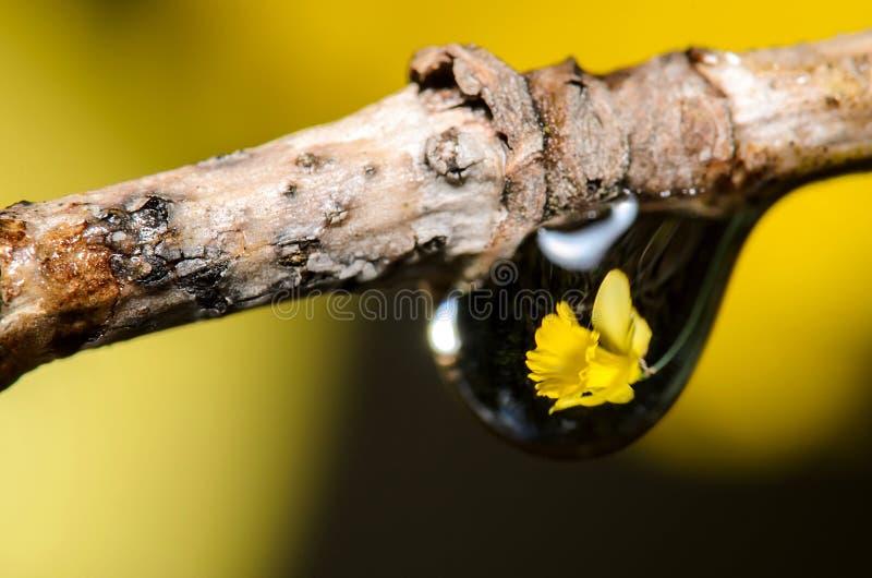 Wasser-Tropfen-Brechung lizenzfreie stockfotografie