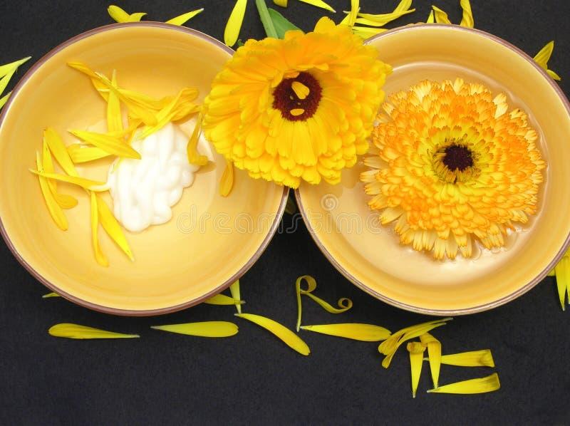 Wasser und Creme der Ringelblume lizenzfreie stockfotografie