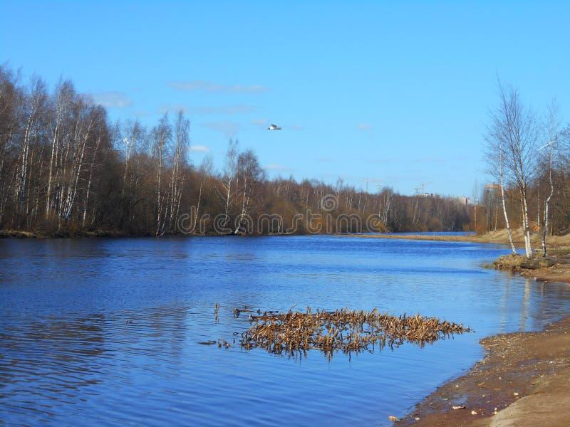Wasser und Seemöwe lizenzfreies stockbild