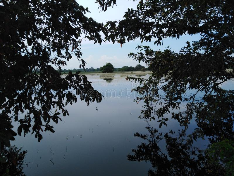 Wasser zwischen dem dunklen Wasser mit zwei Bäumen lizenzfreie stockfotos