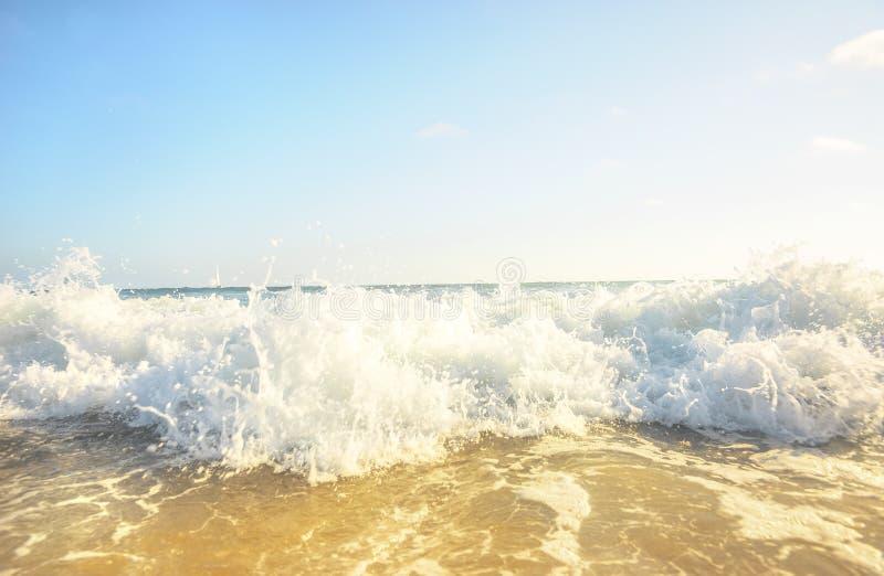 Wasserball-Läufer stockfotos